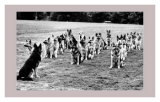 Police Dogs on Parade Prints