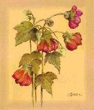 Flores Colgantes IV Print by L. Romero