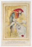 Coco, le Ara Prints by Pascal Cessou