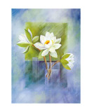 White Water Lilies Posters by Franz Heigl