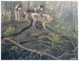 Wolves Prints by Clive Kay