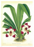 Orquideas I Prints by J. Nugent