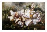 Dawning Magnolias Art by Fangyu Meng