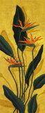 Bird of Paradise Prints by Paul Brent