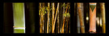 Bamboos Prints by Laurent Pinsard