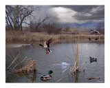 Pond Life Photographic Print by Bill Stephens