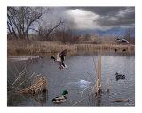 Vida en el estanque Lámina fotográfica por Bill Stephens