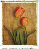 Tulips Print by Vincenzo Ferrato