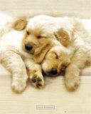 Snooze Póster por Keith Kimberlin