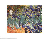 Irises, Saint-Remy, c.1889 Print by Vincent van Gogh