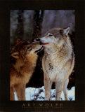 Nördliches Zwischenspiel, Kanada Poster von Art Wolfe