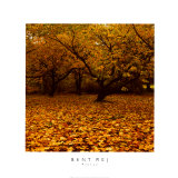 Prunus Prints by Bent Rej