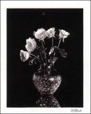 Dramatic Roses Posters by Dick &amp; Diane Stefanich