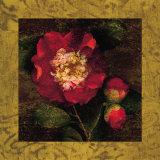 Red Camellias I Plakater af John Seba