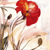 Crimson Poppy I Posters by Marysia 