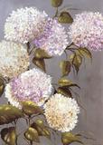 Hortensia Lila Art by  Ximena