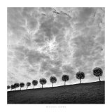 Ten and a Half Trees, Peterhof, Russia, 2000 Prints by Michael Kenna