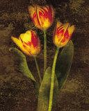 Three Tulips Posters af John Seba