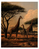Giraffe Family Posters by Clive Kay