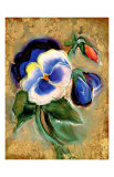 Pansy Giclee Print by Marcella Rose