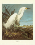 Egrets, Art Print, John James Audubon