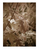 Autumn Photographic Print by Celia Harvey