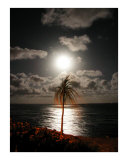 Lunar Palm Photographic Print by Thomas Hannsz