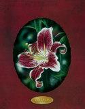 Rote Lilien III Poster von Darryl Vlasak