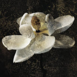 Magnolia II Print by John Seba