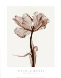 Parrot Tulips I Posters par Steven N. Meyers
