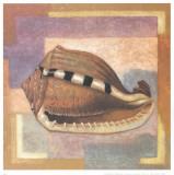 Caracollas II Art by A. Lopez