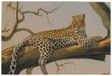 Lounging Leopard Poster by Clive Kay