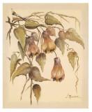 Flores Colgantes III Prints by Luis Romero