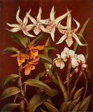 Orchid Trio I Art by Rodolfo Jimenez
