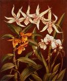 Orchid Trio I Art by Rodolfo Jimenez