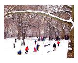 Snow Sledding in Central Park Reproduction procédé giclée par New Yorkled