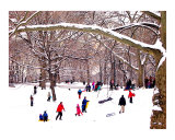 Snow Sledding in Central Park Lámina giclée por New Yorkled