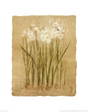 Narcissus Print by Cheri Blum