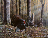 Wild Turkeys Print by Wilhelm J. Goebel