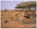Lion Couple Prints by Clive Kay