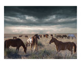 Horses Forever Photographic Print by Bill Stephens