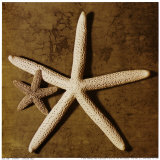 Starfish Poster by Caroline Kelly
