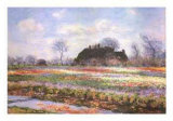 Tulip Fields at Sasenheim Art by Claude Monet