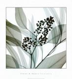 Eukalyptus Kunstdruck von Steven N. Meyers