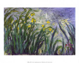 Les iris Prints by Claude Monet