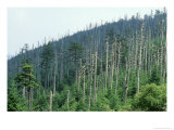 Acid Rain, Dead Conifers Near the Summit of Mount Mitchell, North Carolina Photographic Print by David M. Dennis
