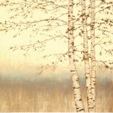 Birch Silhouette II Prints by James Wiens