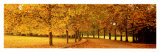 Autumn Leaves, Loire Valley, France Affiches