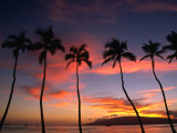 Coconut Palms and the Island of Lanai at Sunset from the Seawall on Front Street, Lahaina, Maui Photographic Print by Karl Lehmann