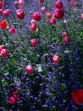 Flowers in Monet's Garden Giverny, Haute-Normandy, France Photographic Print by John Hay